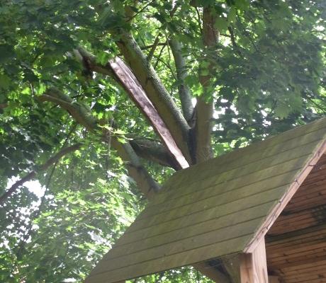 Baum nach Blitzeinschlag