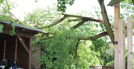 Baum nach Sturm