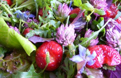 Pfl�cksalat mit Erdbeeren